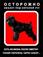 Русский черный терьер, Жизнь после смерти