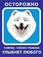 Табличка. Самоедская собака. Собака улыбака (голубой фон, синяя рамка)