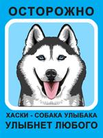 Табличка. Сибирский хаски. Собака улыбака (голубой фон, голубые глаза)