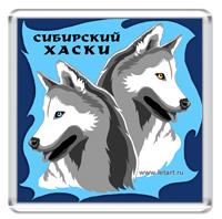 Сибирский хаски #15