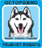 Автомобильная наклейка. Сибирский хаски. Собака улыбака (черный хаски с голубыми глазами, сине-голубой фон)