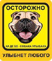 Собака Улыбака Ка Де Бо палевого окраса, желто-оранжевый фон