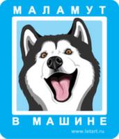 Автомобильная наклейка. Аляскинский маламут. Маламут в машине (сине-голубой фон)