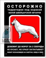 Табличка. Белая швейцарская овчарка. Спринт